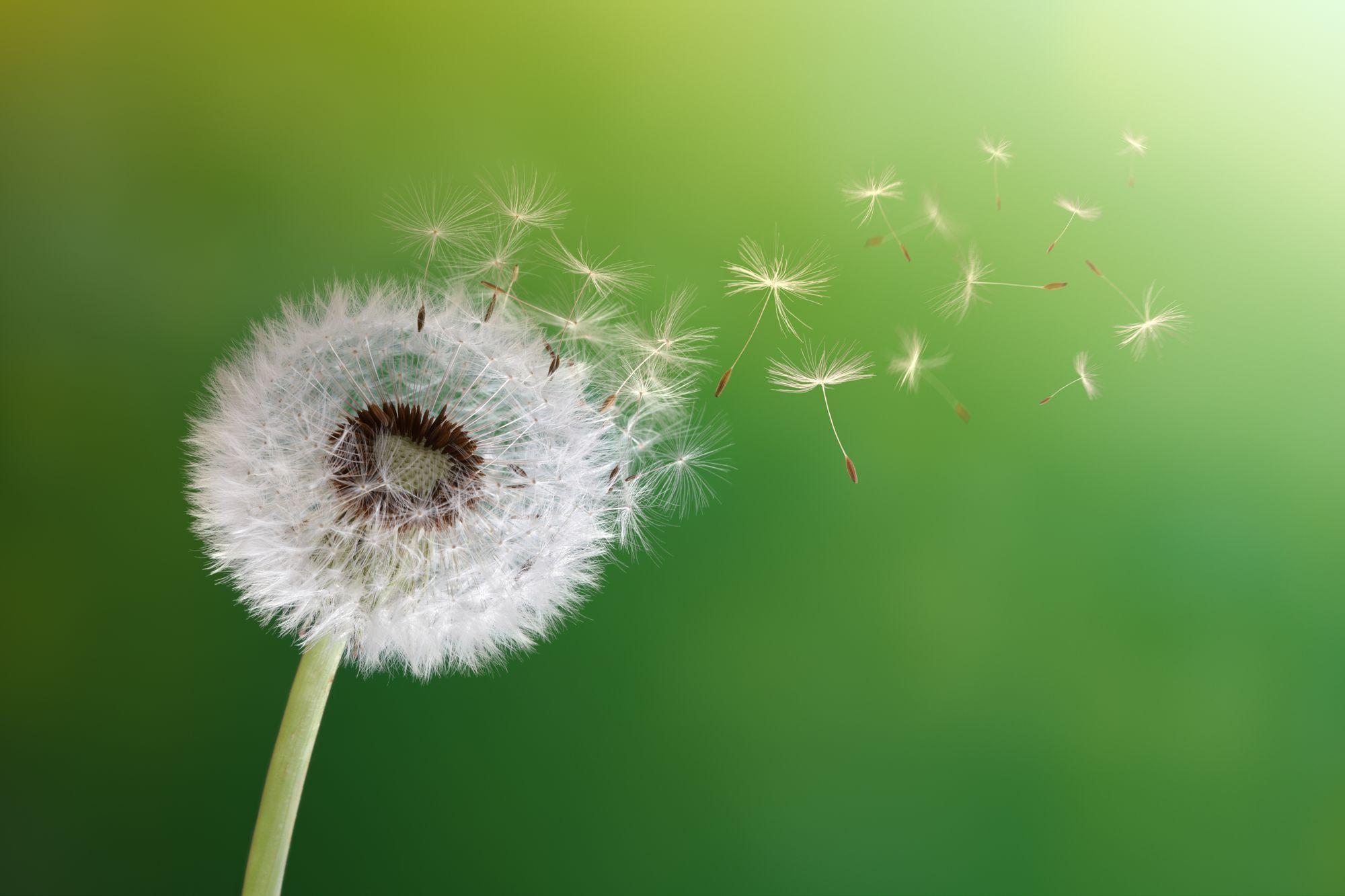 Heuschnupfen: Wenn die Polle aufs Auge trifft